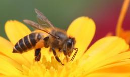 Cận cảnh 21 ngày đầu tiên trong cuộc đời loài ong
