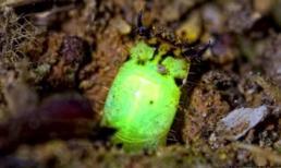 Điểm danh sinh vật kỳ lạ rất ít người tin từng tồn tại trên trái đất