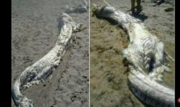 Bắt được 'Cá Rồng' khổng lồ trên biển