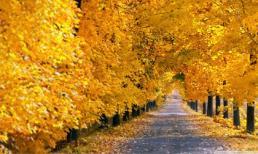 Loạt ảnh tuyệt đẹp về mùa thu lá vàng rơi