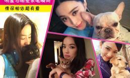 Ngắm thú cưng đáng yêu của mỹ nhân Hoa ngữ