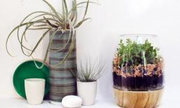 Tự trồng vườn cây mini cho bàn học từ lọ thủy tinh cũ