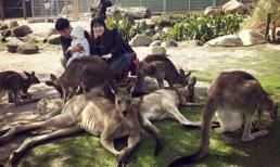Gia đình Lý Hải - Minh Hà hào hứng khám phá xứ sở chuột túi