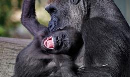 Những khoảnh khắc cười 'tỏa nắng' của động vật siêu đáng yêu