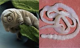 9 loài động vật có khả năng đặc biệt mà bạn chưa từng biết