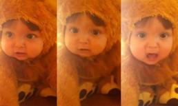 'Sư tử nhí' gầm siêu đáng yêu hút hơn 23 triệu lượt xem