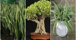 Ba loại cây tạo oxy ban đêm, rất tốt cho người hay mất ngủ