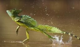 'Điểm danh' những động vật quái dị nhất trong rừng rậm Amazon