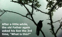 Chuyện con quạ và bài học tôn kính cha mẹ từ trái tim