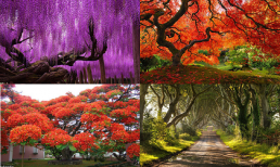 Chiêm ngưỡng vẻ lộng lẫy của những loài cây khổng lồ đẹp nhất thế giới