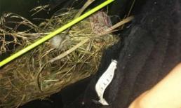 Nam thanh niên phơi quần 2 tuần lười không rút, bị bầy chim xâm chiếm làm nguyên cái tổ bên trong