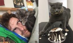 Ảnh cười: Lý do tại sao bạn không nên nuôi mèo?