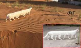 Bất ngờ trước hình ảnh mèo 8 chân nhưng sự thật đằng sau khiến nhiều người 'ngã ngửa'