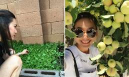 Ngắm vườn rau trái xanh mướt, trĩu quả của Hoa hậu Dương Mỹ Linh tại Mỹ