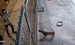 Clip trộm chó tại Việt Nam gây chấn động báo nước ngoài