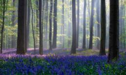 15 khu rừng đẹp diệu kỳ như bước ra từ trong cổ tích