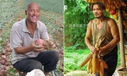 'Cười nghiêng ngả' khi xem loạt ảnh chế sao Hollywood thu hoạch rau, củ, quả cực bá đạo