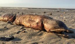Phát hiện sinh vật kỳ lạ dạt vào bờ biển Texas sau cơn bão Harvey