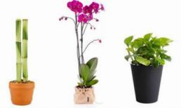 Cuộc sống sẽ tốt đẹp, thịnh vượng hơn khi đặt 3 loại cây này trong nhà
