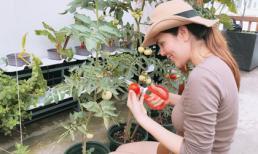 Giàu có là thế nhưng Hoa hậu Phương Lê vẫn tự tay chăm sóc vườn rau sạch
