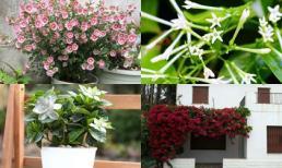 8 loại hoa thơm hơn cả nước hoa nên trồng trên ban công khiến cả nhà luôn ngát hương