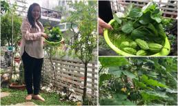 Vườn rau xanh mướt mắt 'nhìn là thèm' của vợ chồng Lê Tuấn Anh - Hồng Vân