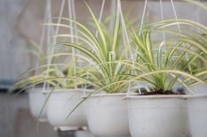 6 loại cây người giàu không bao giờ bày trong nhà, tránh quét sạch tài lộc, xua đuổi vận may