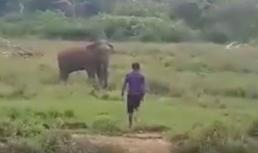 """""""Thôi miên"""" voi hoang dã, người đàn ông trả giá bằng cả tính mạng"""