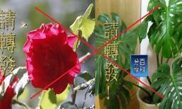Phong thủy: Đừng đặt 2 chậu cây này trong nhà nếu không tương lai sẽ xấu cả đời
