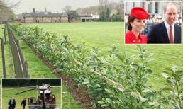 Công nương Kate và Hoàng tử Harry chi gần nửa tỷ đồng để làm hàng rào bảo vệ sự riêng tư