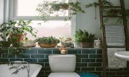 Đặt chậu cây này trong phòng tắm, không còn mùi hôi, muỗi cũng biến mất dạng