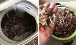 Cặp đôi nhận gạch đá 'ngu hết phần thiên hạ' vì rửa tôm bằng máy giặt và cái kết đắng