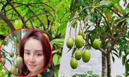 Khoe khu vườn ngập tràn trái cây, rau xanh trong biệt thự triệu đô nhưng mặt mộc của Vy Oanh mới gây chú ý