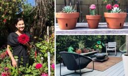 Khu vườn ngập tràn sắc màu của Dương Mỹ Linh tại Mỹ