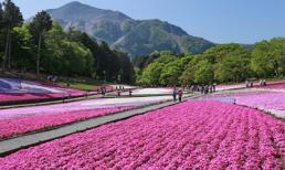 Ngắm mùa hoa lá đỏ và tắm tuyết trong mùa hè tại Nhật Bản, sức hút hấp dẫn khi du lịch tại Nhật Bản