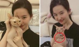 Lưu Diệc Phi chụp ảnh với mèo đắt nhất nhì thế giới nhưng chiếc nhẫn hoành tráng trên tay cô mới là điều gây chú ý