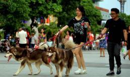 Liên tiếp xảy ra chó cắn chết người: Báo động tình trạng chó thả rông mà không rọ mõm