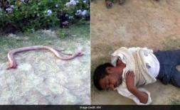 Bị rắn cắn, người đàn ông trả thù bằng cách chưa từng thấy