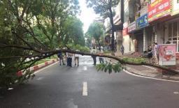 Đi đường, người đàn ông bị cây đổ trúng người tử vong ở Hà Nội