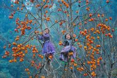 Mê hồn trước cảnh hồng trĩu nặng của mùa thu cao nguyên Mộc Châu