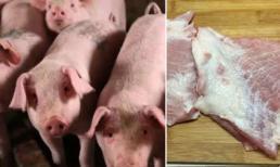 Bộ phận bẩn nhất của lợn đừng dại mà ăn kẻo mang họa