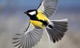 Rùng mình loài chim ăn não đáng sợ nhất thế giới