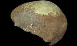 Phát hiện hộp sọ người cổ xưa cách đây 55.000 năm