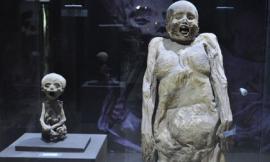 Khám phá bảo tàng xác ướp ghê rợn nhất ở Mexico