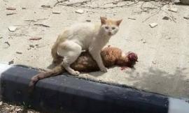 Hình ảnh chú mèo đau đớn bên xác bạn khiến hàng triệu người rơi nước mắt