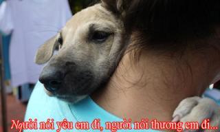 Người yêu có thể không có nhưng chó bạn đã có 1 con chưa?