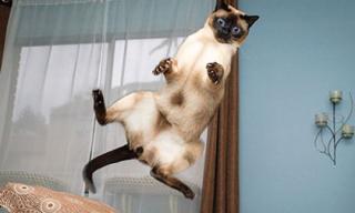 Cười vỡ bụng những bức ảnh chụp... mèo bay