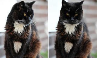 Cô mèo 24 tuổi tương đương 115 tuổi thọ loài mèo