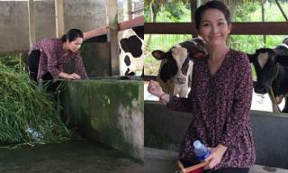 Kim Hiền bất ngờ về quê làm nông dân chăn bò