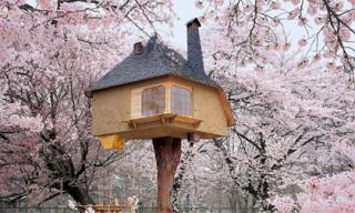 Những ngôi nhà cây đẹp nhất thế giới